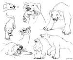 Naga and Pabu Sketch Dump