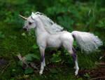 Little Foal- 1