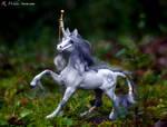 Equine Cast: Miri II