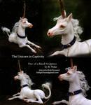Unicorn in Captivity by SovaeArt