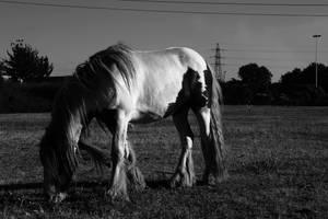 Horse by Szemhazaj
