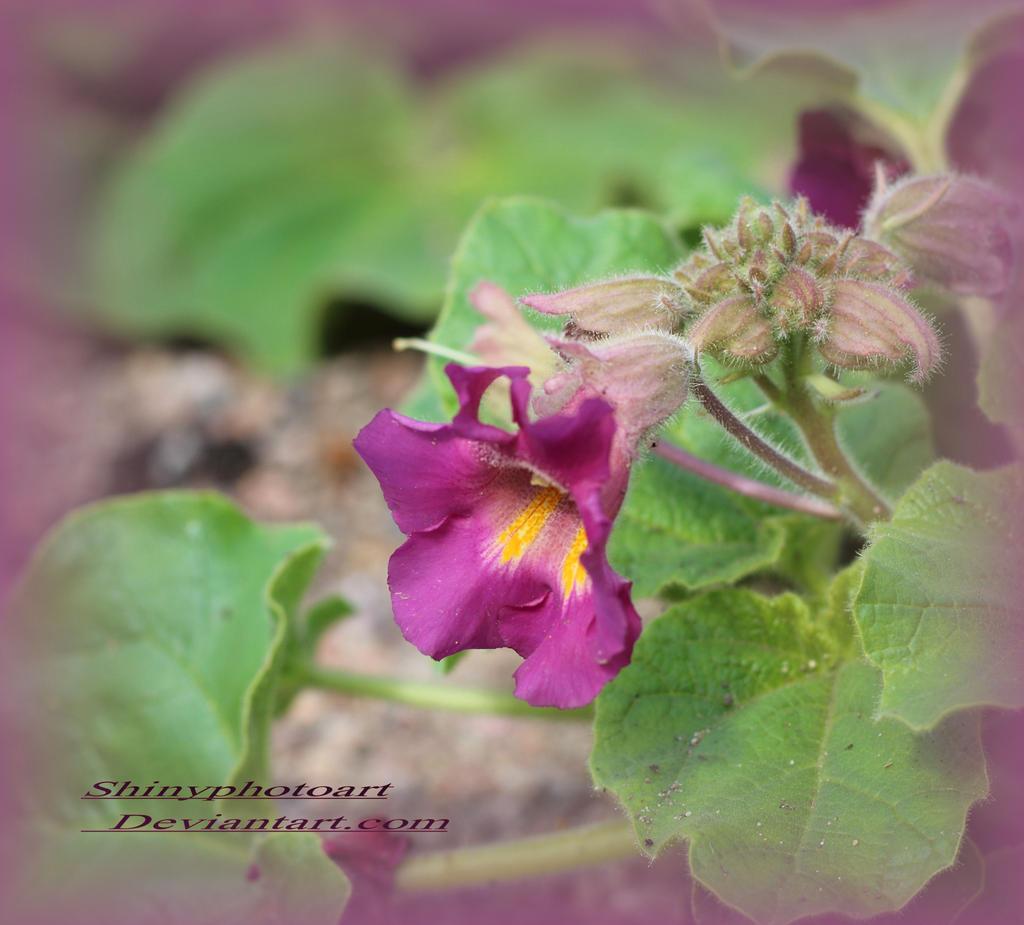 Where flowers bloom by ShinyphotoArt