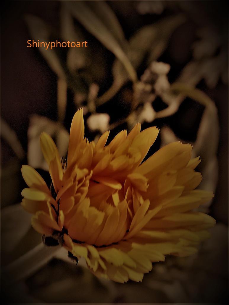 Optimist at heart by ShinyphotoArt
