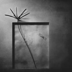 Empty frame II by Menoevil