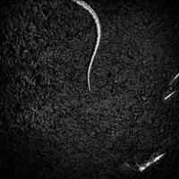 Dead snake by Menoevil