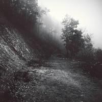 Misty dirt road by Menoevil