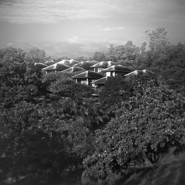Amid the jungle by Menoevil
