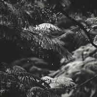 The Rain by Menoevil