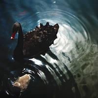 Black Swan by Menoevil
