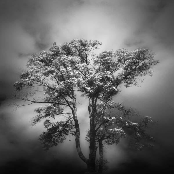 Soul Tree II by Menoevil