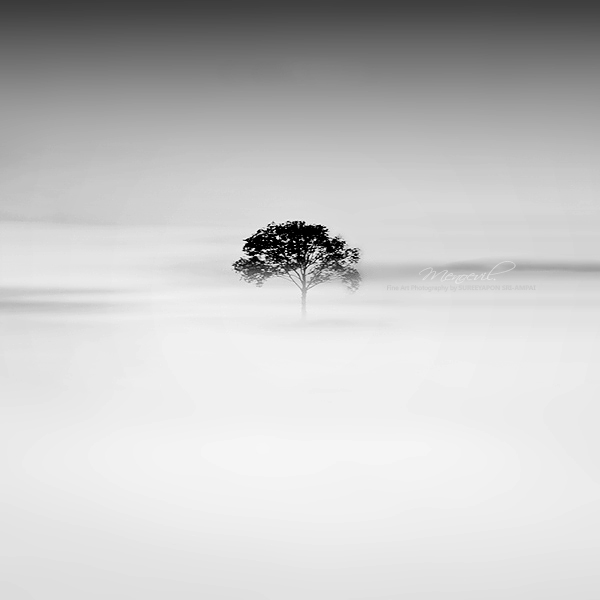 Black Tree by Menoevil