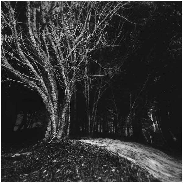 Soul Tree IV by Menoevil
