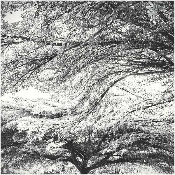 Soul Tree V by Menoevil
