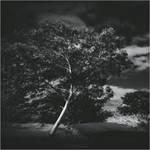 Soul Tree VI