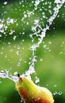 splash II by musemela