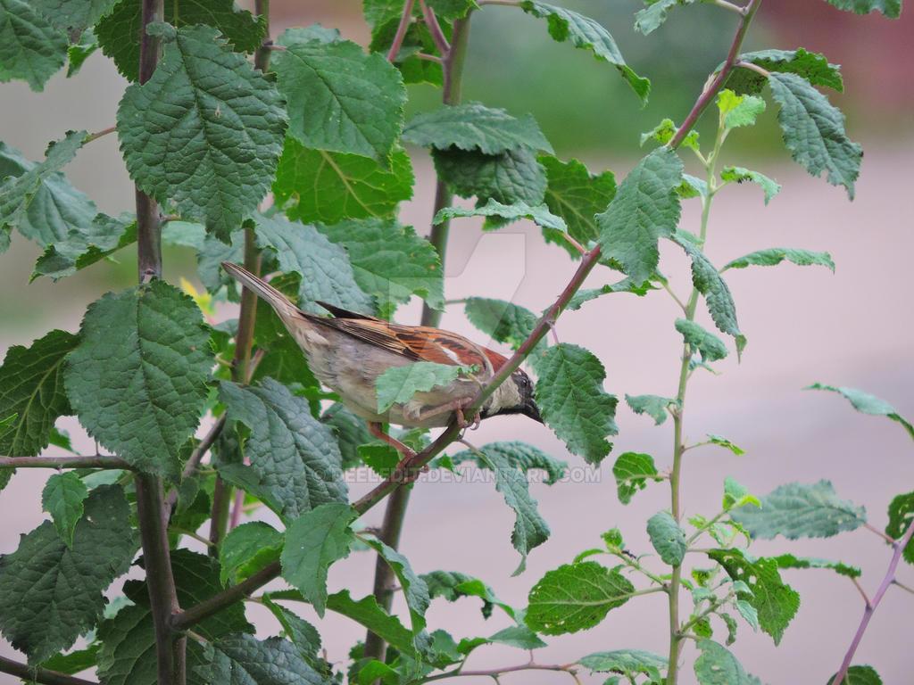 hungry bird by Deeledit