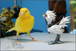 Tori and the Chocobo - video ^_^