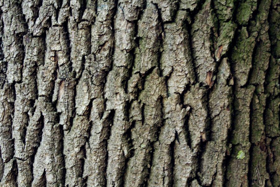 nature texture by teelamb on deviantart