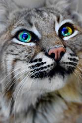 Bobcat by Yellowstoned
