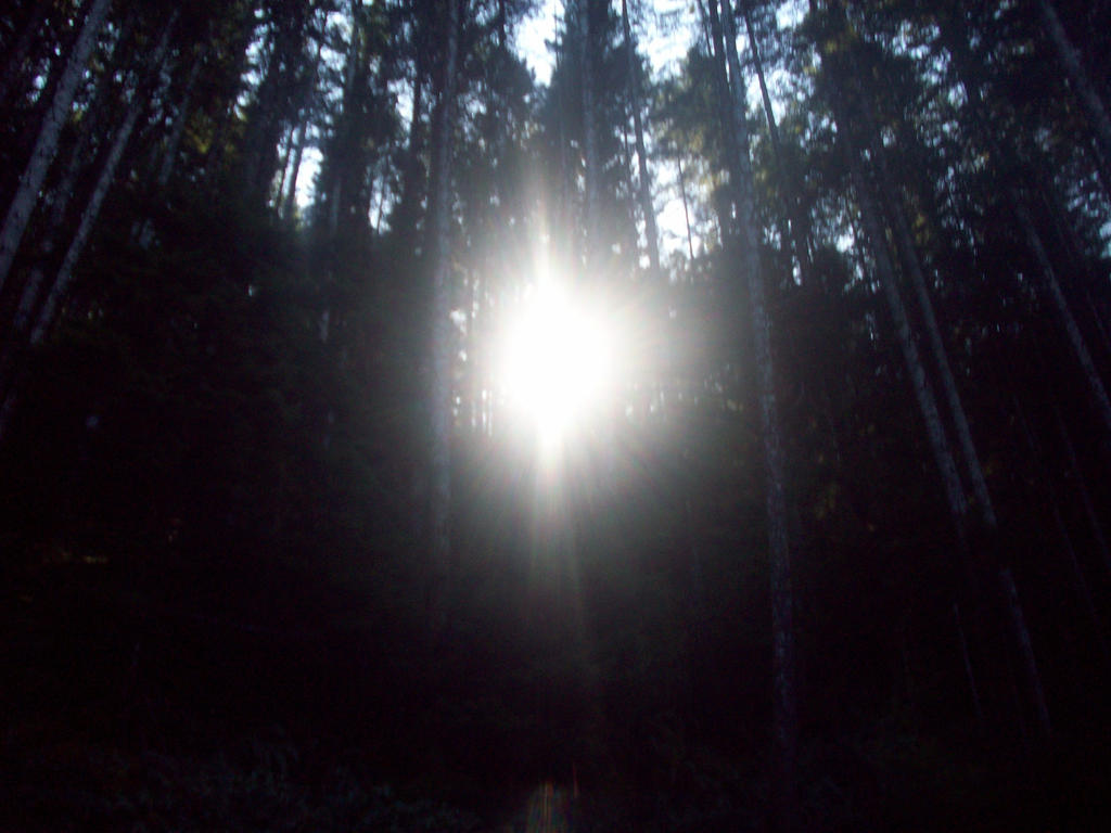 Sun in between trees by eyannaandkianalovesu