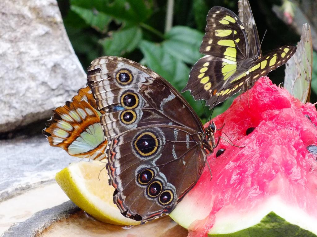 Butterflies by eyannaandkianalovesu