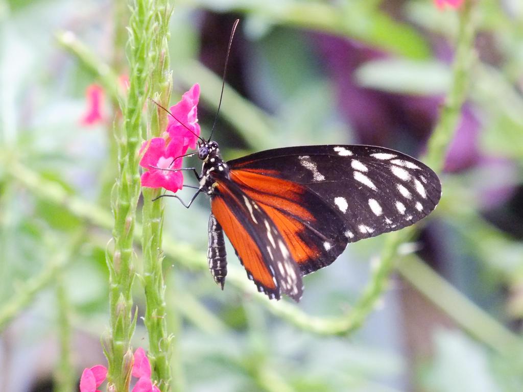 Butterfly by eyannaandkianalovesu