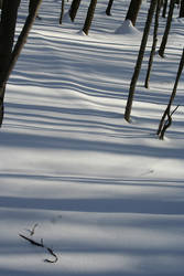 Stripes on Snow