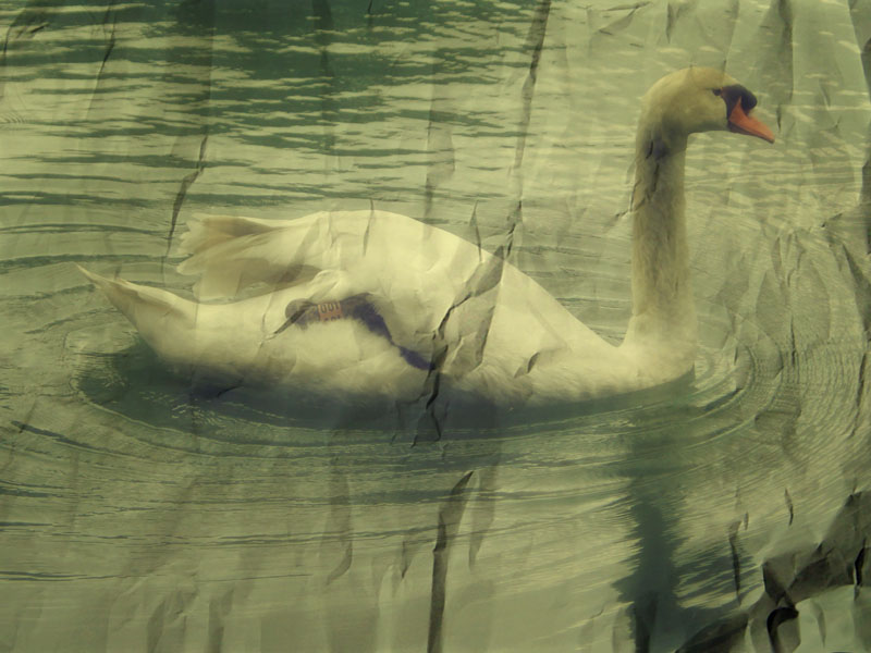 Swan:vintage by katmcgeer
