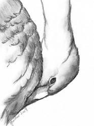 Sad Swan by r-Ghaidaa