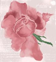 rose by r-Ghaidaa