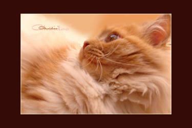 cat by r-Ghaidaa