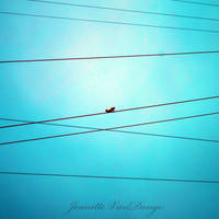 On the Wire. by NettieR