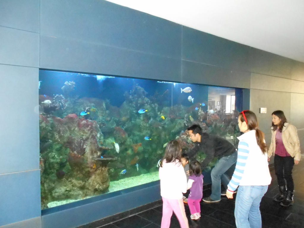 Cupertino library aquarium by Mindslave24-7