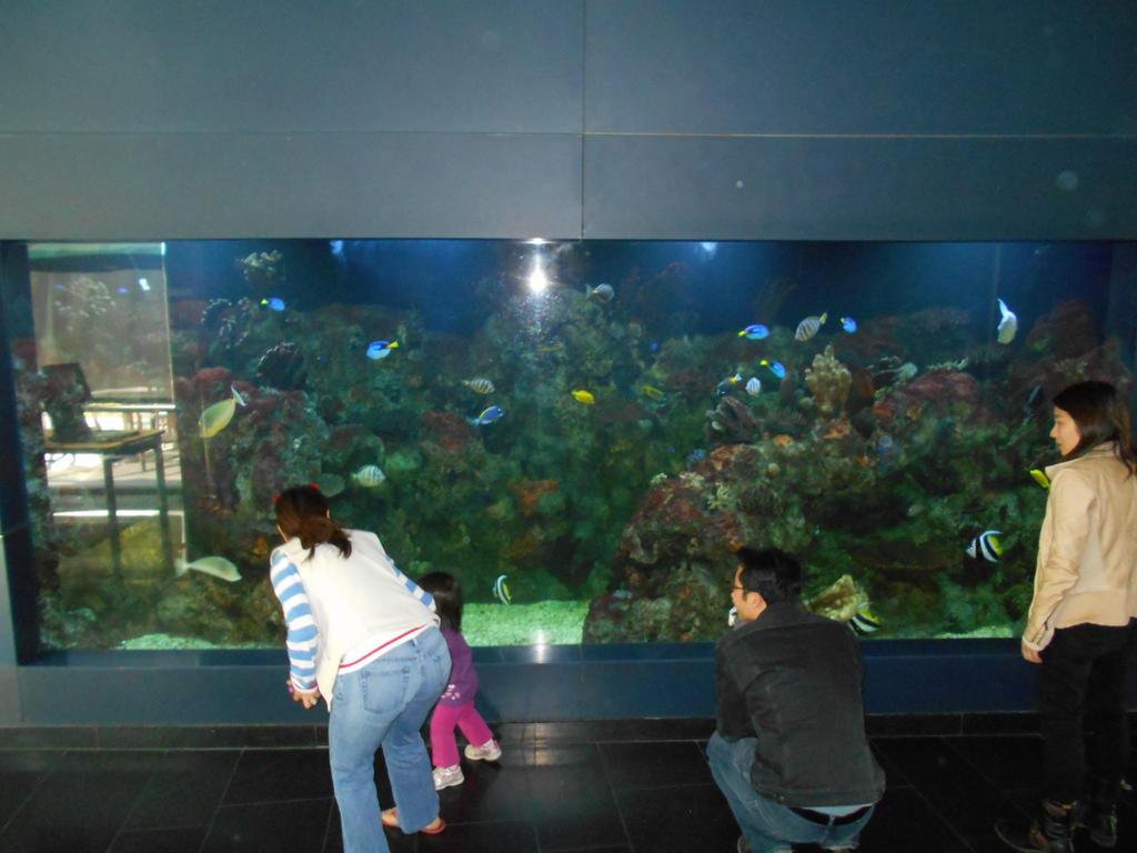 Cupertino library aquarium II by Mindslave24-7