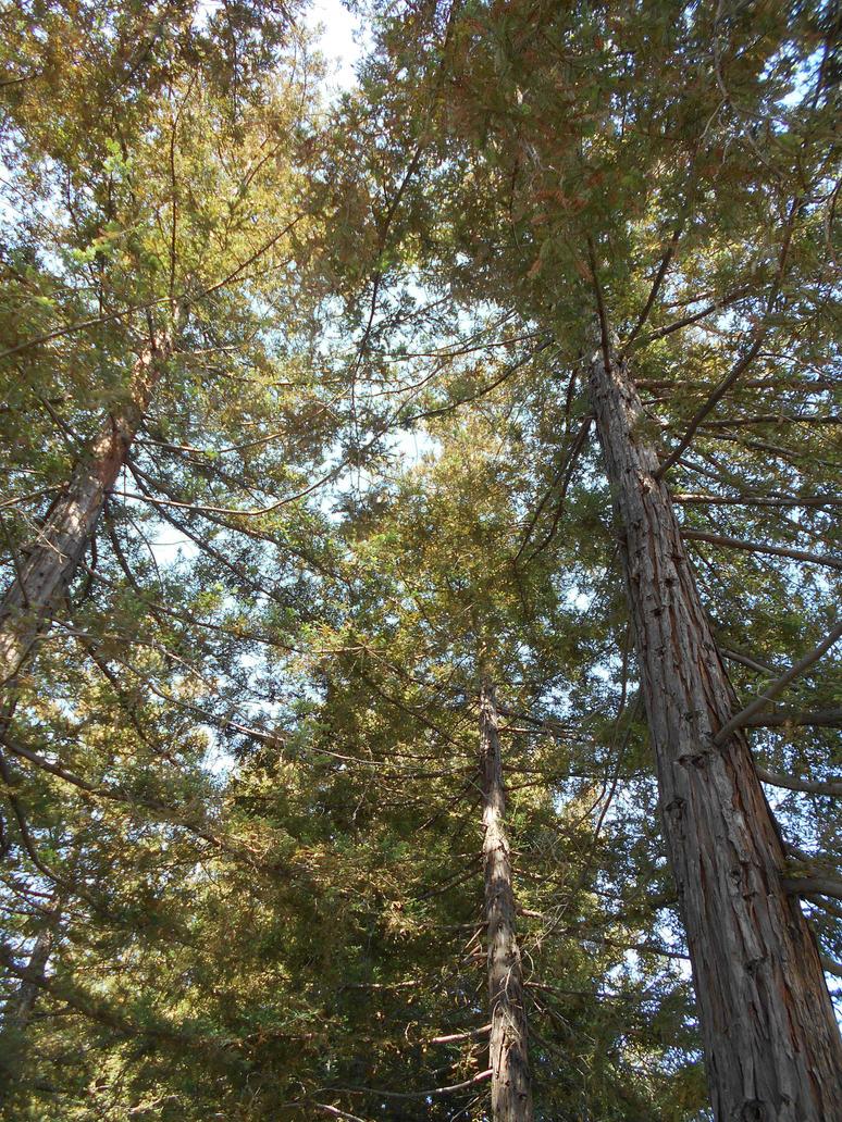 Under the Redwoods.... by Mindslave24-7