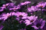 Purple Flowers by vanilla-chihuahua