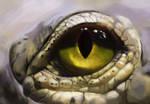 Color Study - Crocodile