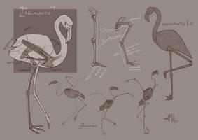 Sketch of a Flamingos