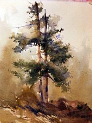 Tree study by mrartteacher