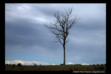 Tree at the edge of the world.