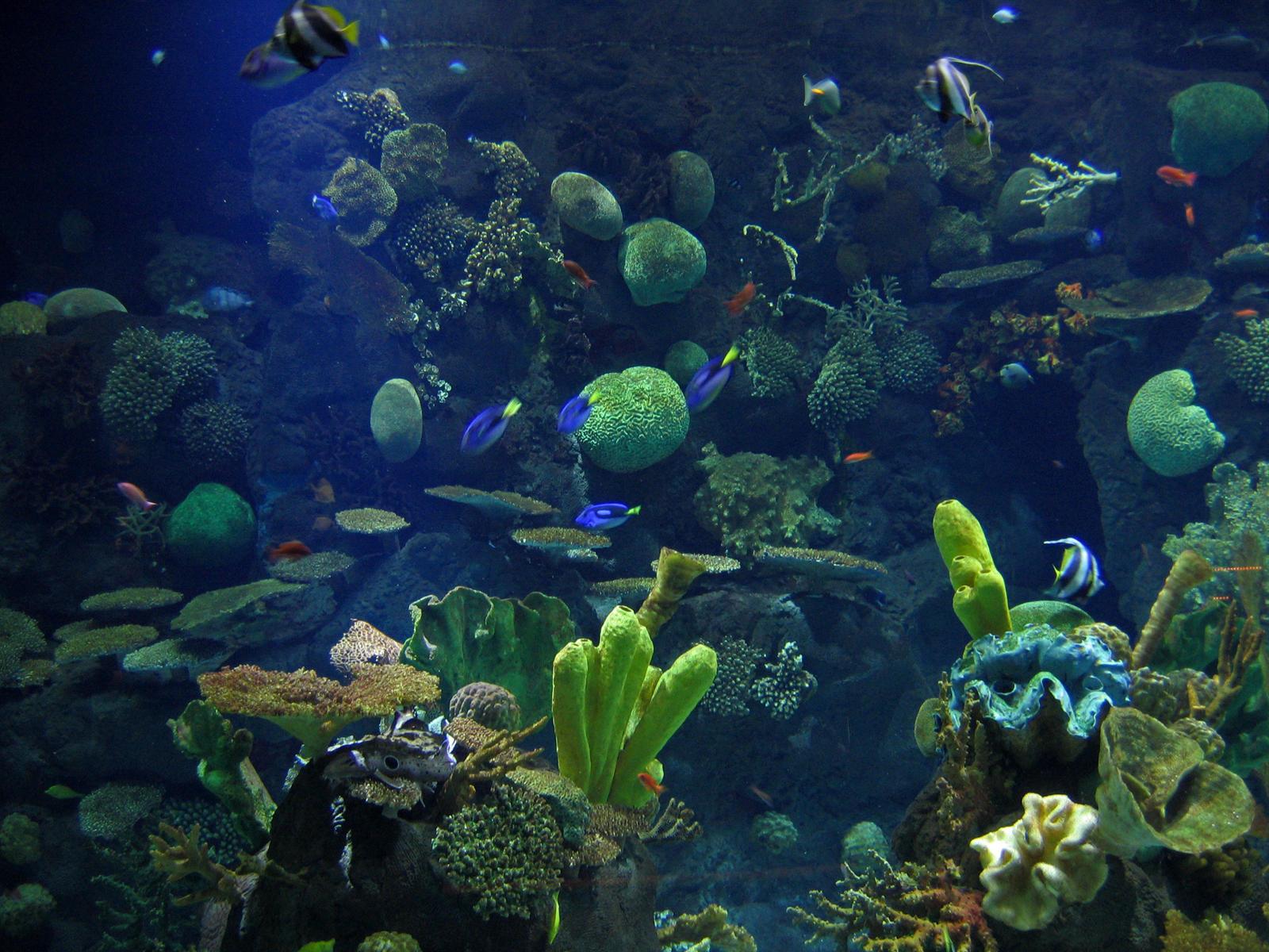 Aquarium by AreteEirene