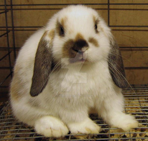 Bunny Rabbit by AreteEirene