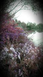 Waterside Gardens