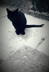 Black Cat of Peace