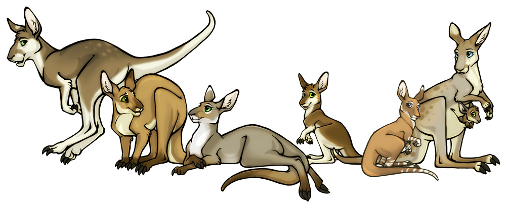 Australis Plains Kangaroos by lyosha