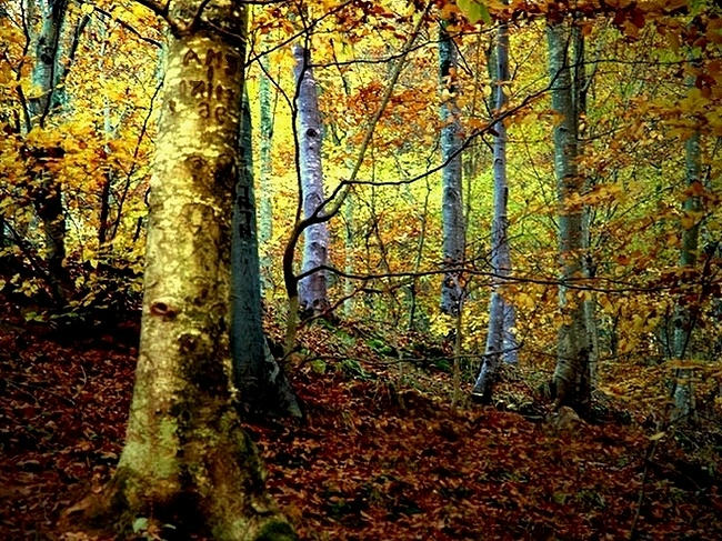 Gustatory Season by fleka