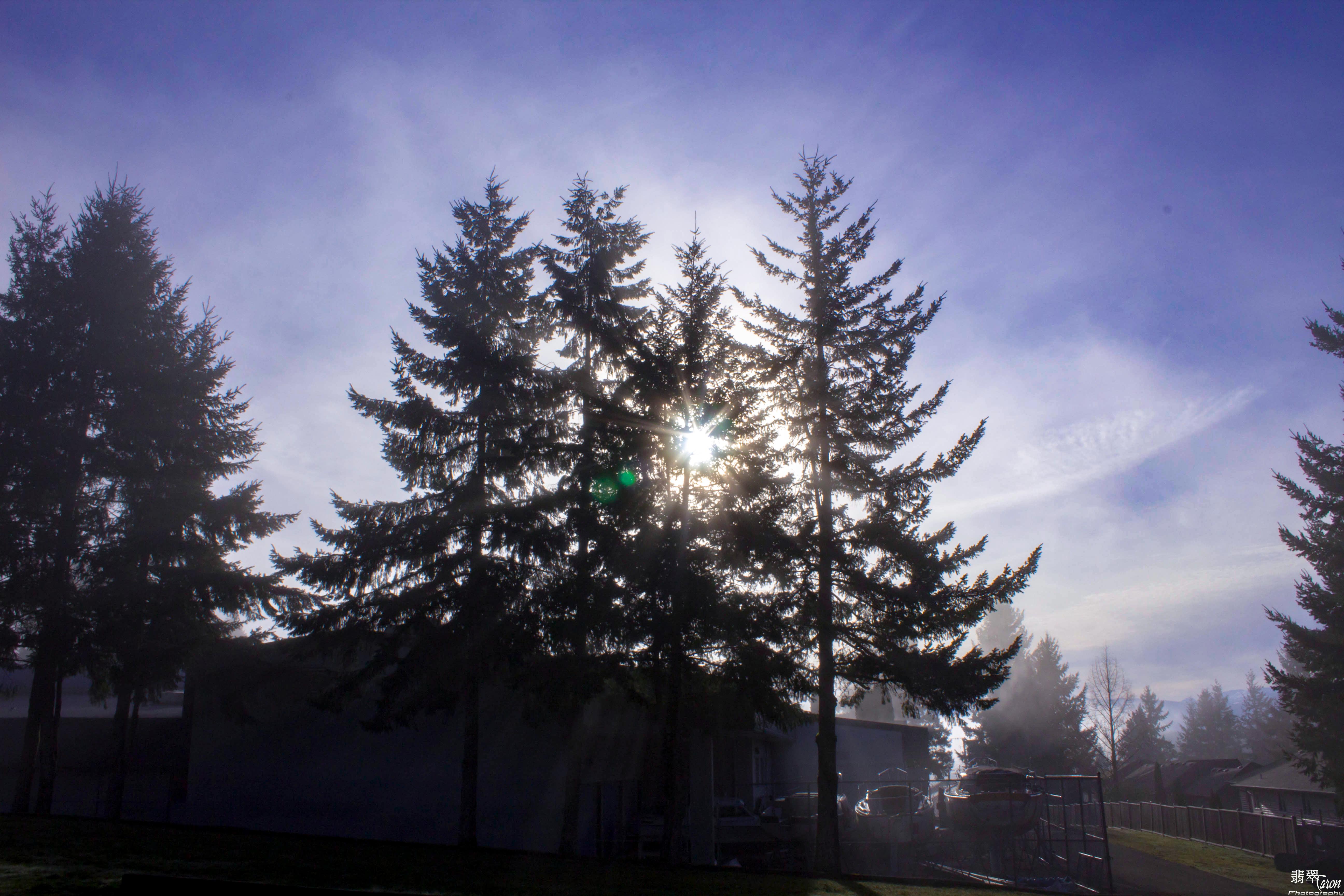 Foggy? by THEAESTHETICWEEB