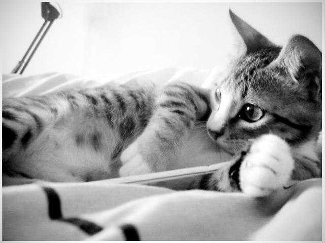 Baby Kitty by catarinamzfernandes