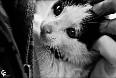 Litle kitty by catarinamzfernandes