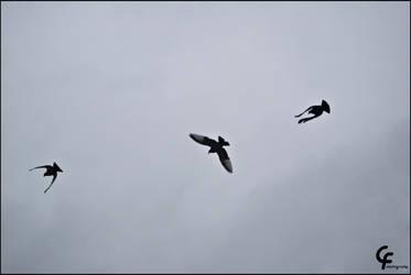 birds by catarinamzfernandes